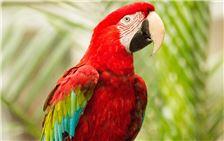 Tropical Birds in Atrium